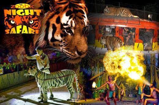 Zoobic Night Safari